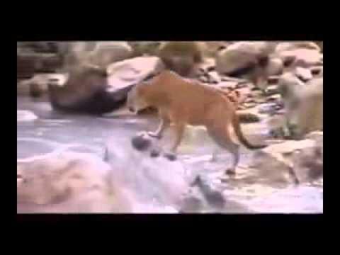 Video Impactante:   Veanlo !!! Cuando Nos Alejamos De Dios