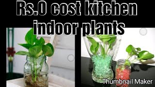 Kitchen indoor plants organization//Rs 0 cost beautiful home decor// thani  nadan cooking