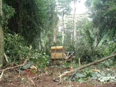 Desmatamento .....iriri-Pará