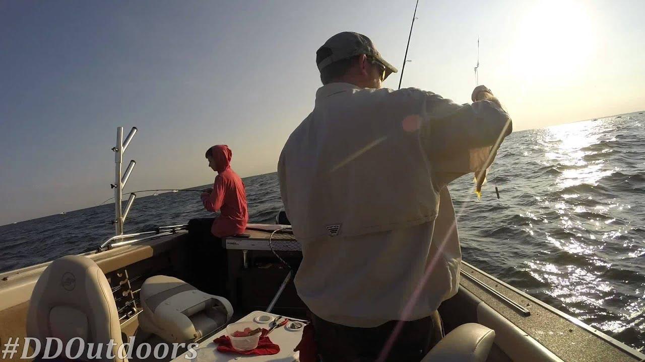 Walleye Perch Fishing On Lake Erie Fishing Fever