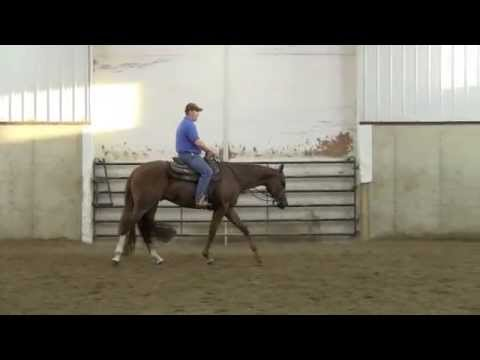 GOTCHA HOT MONEY - 2011 AQHA 16-2 HAND SHOW GELDING BY HOT N BLAZING