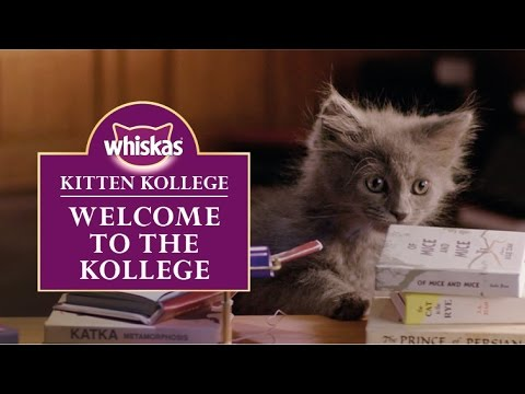 Ep.1 Welcome to the Kitten Kollege : Kitten Kollege