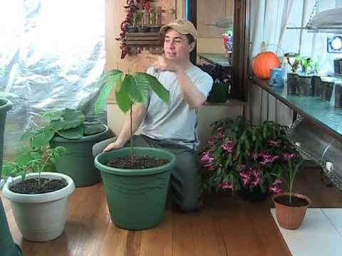 Indoor Gardening answers to YOUR questions