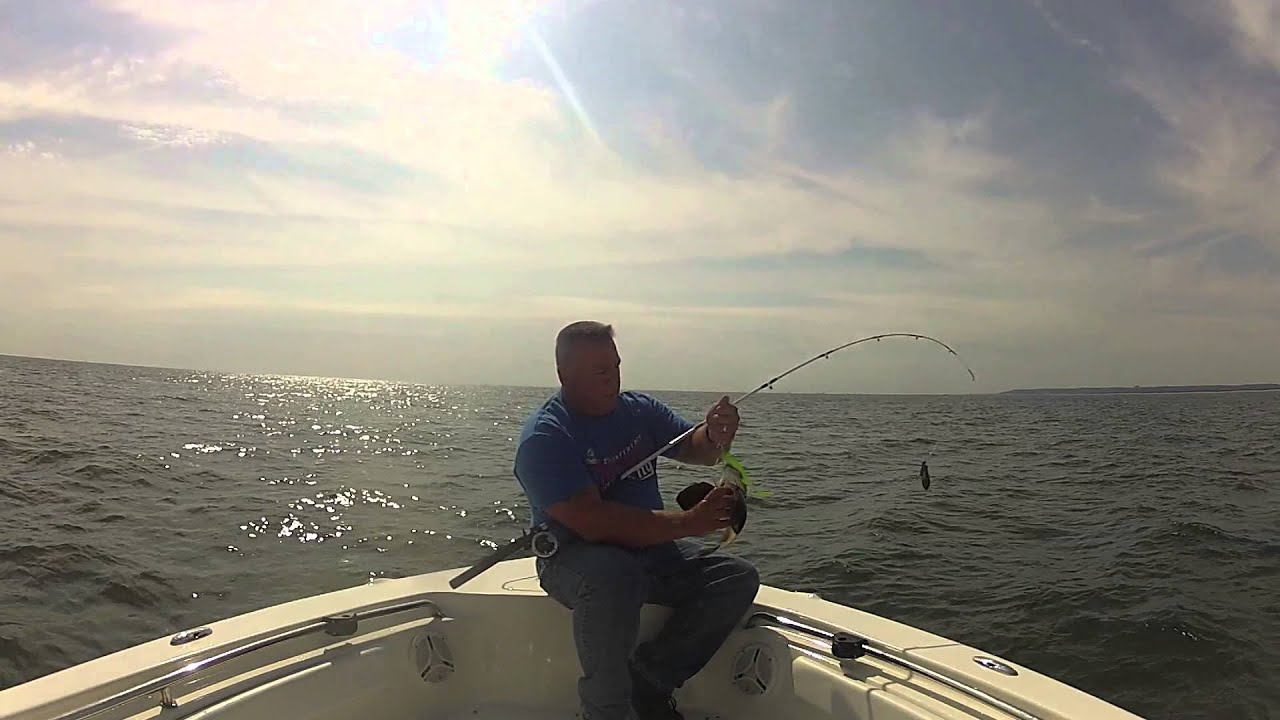 Fluke fishing 9 5 2013 sandy hook nj youtube for Fluke fishing nj