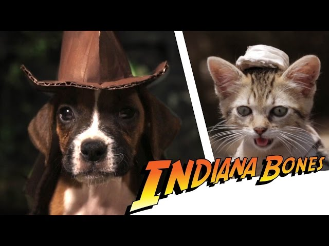Indiana Bones - Raiders of the Lost Bark