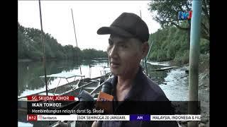 N12 - IKAN TOMBOT - MEMBIMBANGKAN NELAYAN DARAT SG. SKUDAI [18 JAN 2019]
