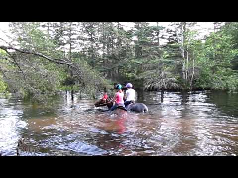 Horses at the water hole