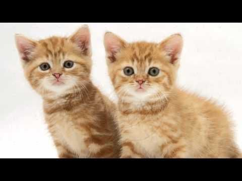 Кошки Jam - Кошачья Песня