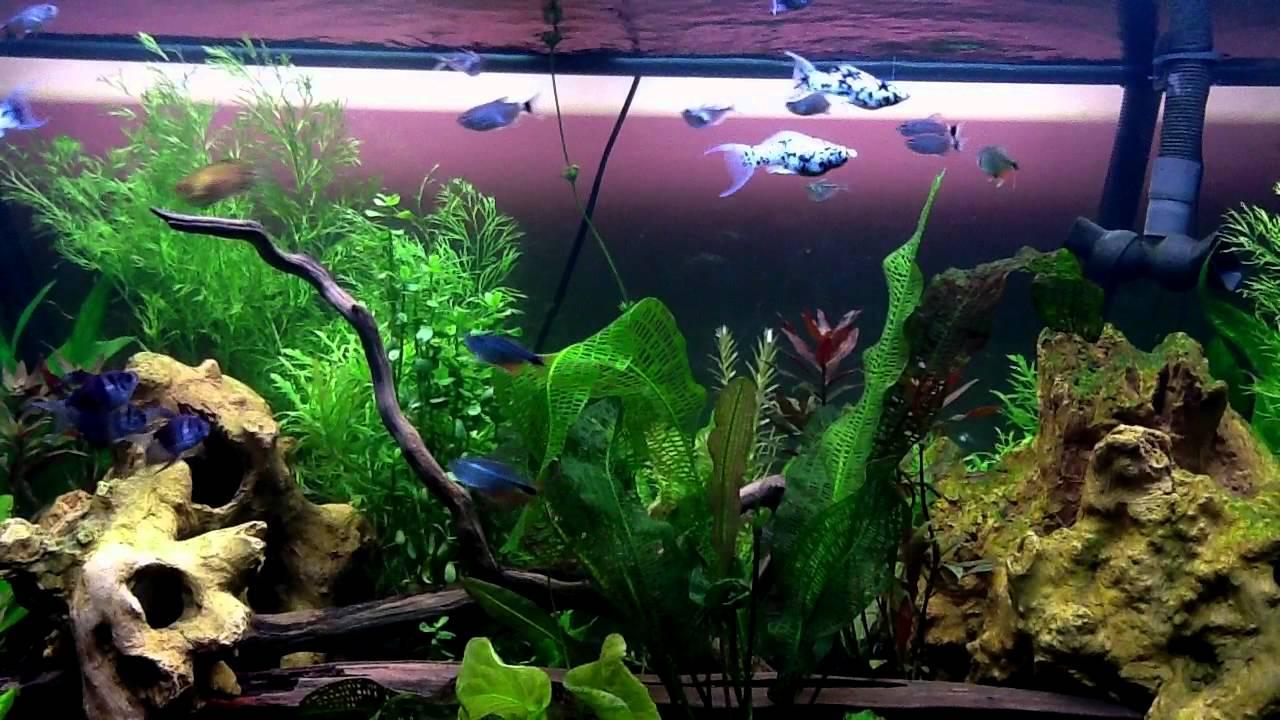 Fish Tank TV - Fish Eating Live Plants - YouTube