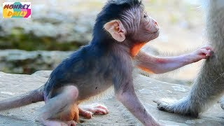 Mom hungry please give me a milk | Best relationship Queen mom &Dutches daughter | Monkey Daily 2616