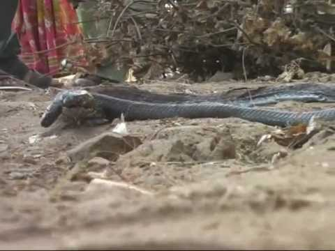 Naag Nagin-visual-godhra Gujarat.wmv video