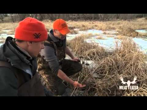 Beaver and Muskrat Trapping with Steven Rinella