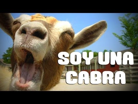 SOY UNA CABRA Goat Simulator