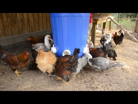 3 Bag EASY Automatic Chicken Feeder