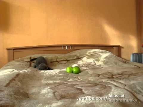 Thumbnail of video Acojonante escena de terror, un pobre gatito es atacado por dos cosas verdes malévolas
