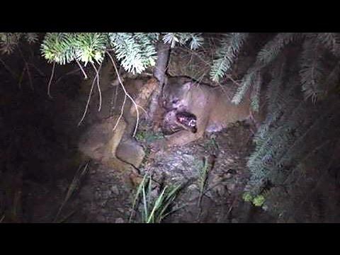 Cougar vs Kitten  Pornhubcom