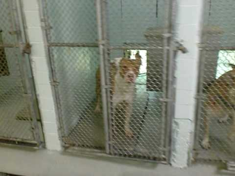 Animal Rescue Shelter - Newark, NJ