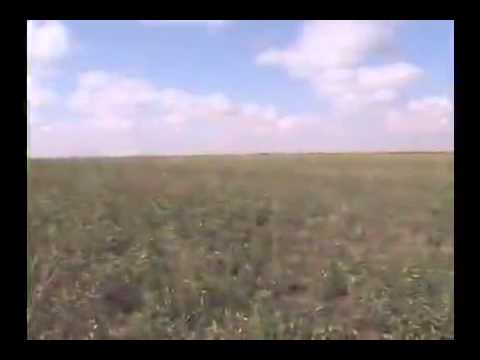 TOH  Zone 9 - The High Plains Video 480x320 Video