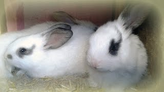 Our rabbit farm in Europe. Cute BABY BUNNIES don't want to sleep at night.