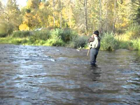 Cowlitz River Late Season Chinook Fishing