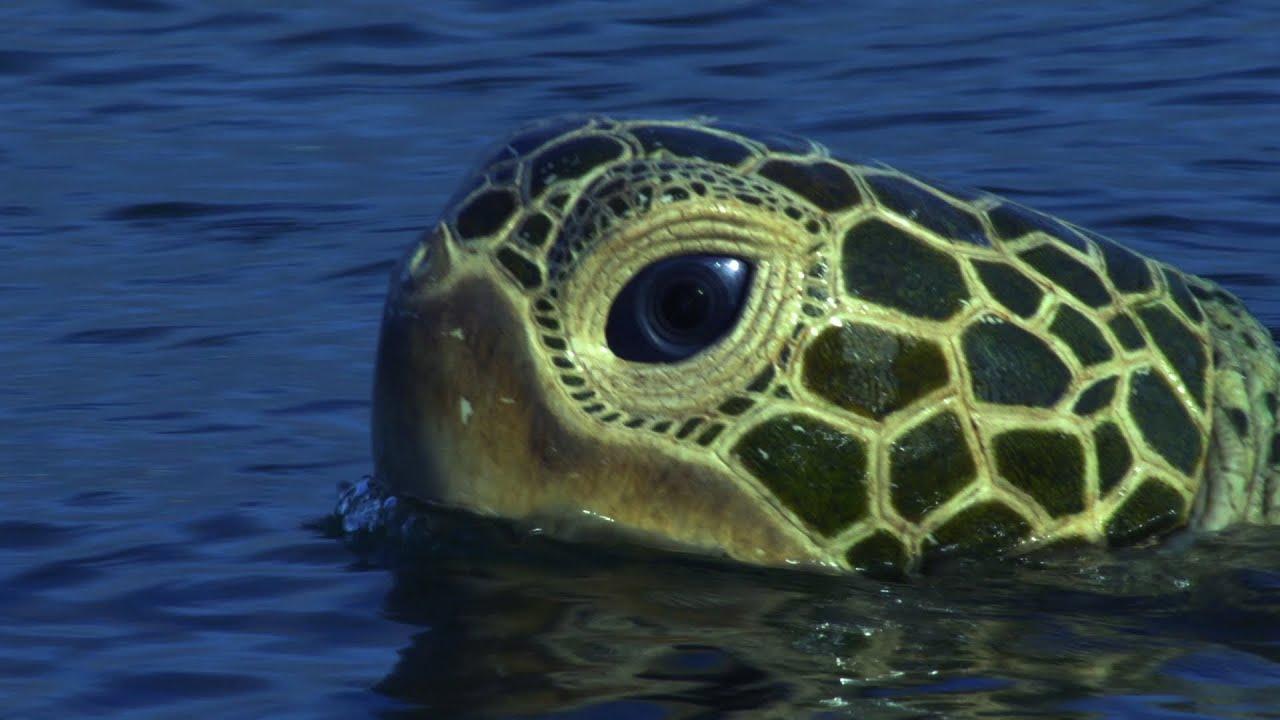 Wyland Marine Life Artist