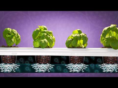 Best Vertical Grow Room | Big Buddha Box | Hydroponic Grow System | SuperCloset
