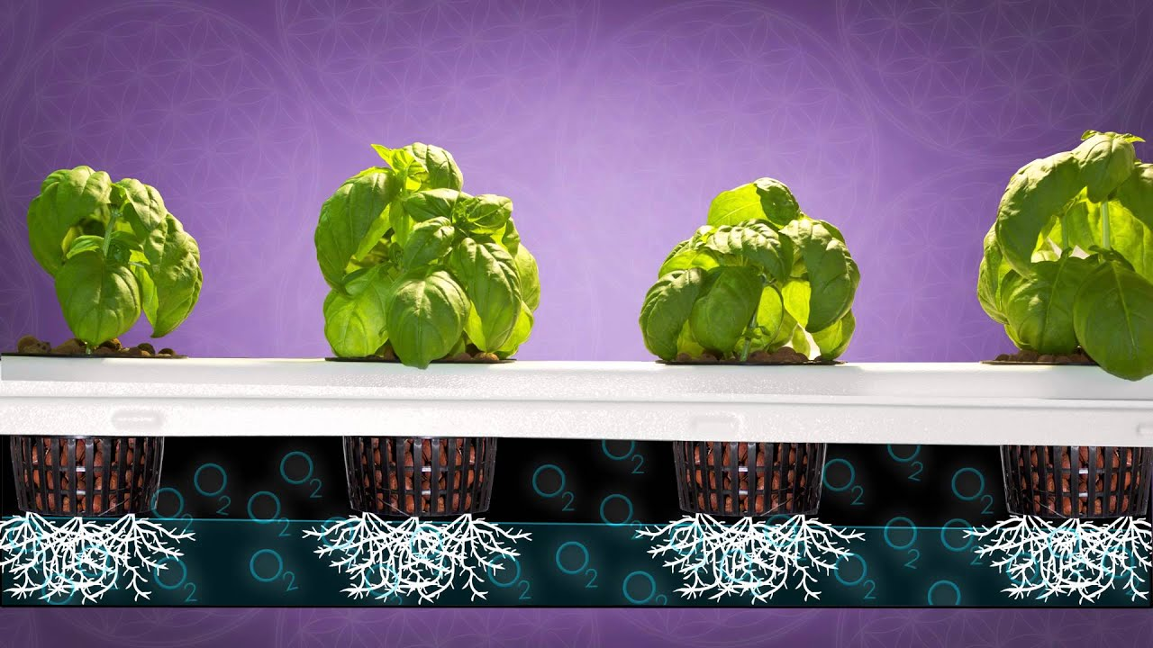Best Vertical Grow Room Big Buddha Box Hydroponic Grow