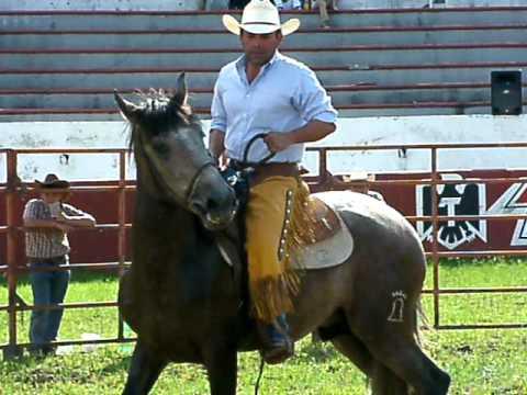 Primera silla manejo natural del caballo youtube for Sillas para caballos