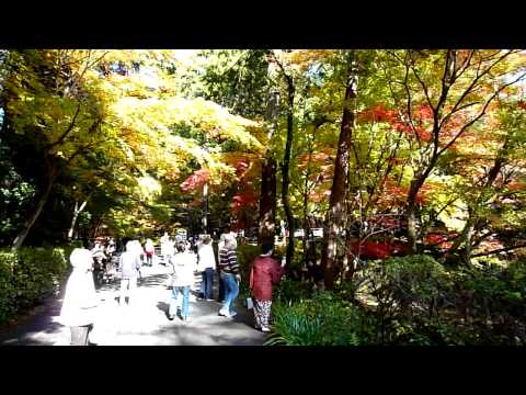 遠州森町 小国神社 紅葉 2009.11.26