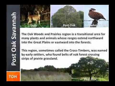 TOH  Zone 3 Video - The Post Oak Savannah 480x320