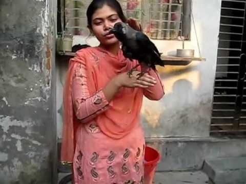 Kamini, The Talking Crow from Rajshahi