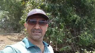 Konkan, Khot Jua island, Masure. खोत जुआ बेत