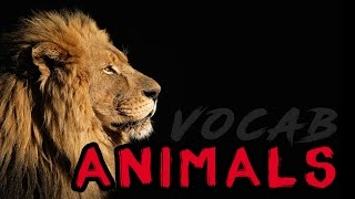 Japanese Vocabulary   |   Animals