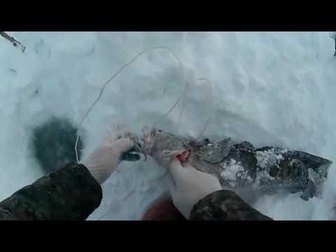 на что ловить налима на севере