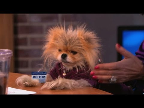 Lisa Vanderpump's Adorable Dog, Giggy video