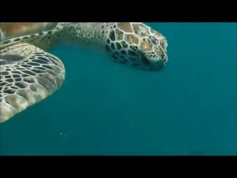THE ELEPHANT MAN OF THE GREAT BARRIER REEF 16 ELEPHANT CONSERVATION VIDEO
