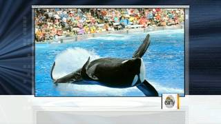Tilikum: A year after trainer death