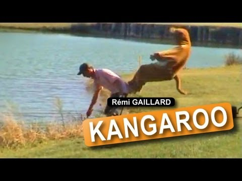 Kangaroo (rémi Gaillard) video