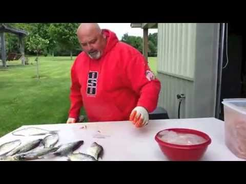 How to Fillet a Fish with an electric knife