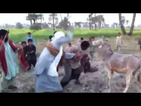 Azhar hussain  Dharabi ... Chakwal......+923015776712...+971553238537......funny  best dasi  video