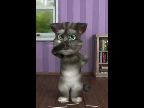 Talking Cat Youtube