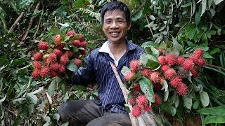 Pick and eat rambutan wild ✦ YUMMY