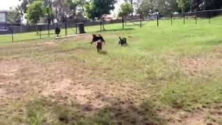 Rugby ball chasing