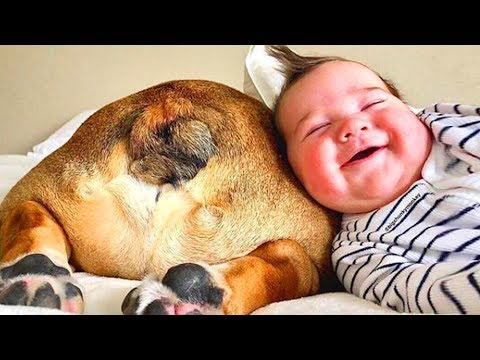 Funny Babies Playing With Dogs - Baby and Pet Videos [Funny Baby]