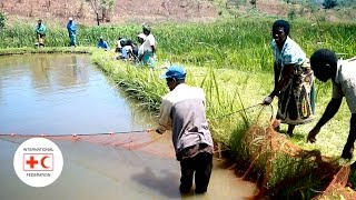 Using Fish To Build Resiliency To Food Insecurity In Malawi