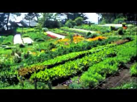New Zealand Food Growing Ban,(Police2Search Homes)