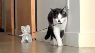 שני חתולים רבים מי ינצח ?