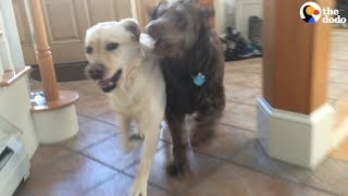 Dog Reunites With Best Friend | The Dodo