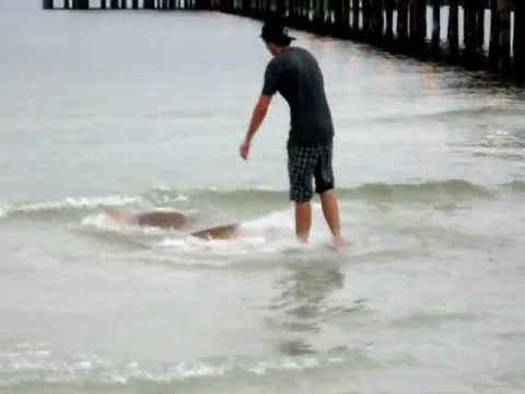 Shark Encounter - Anna Maria Island