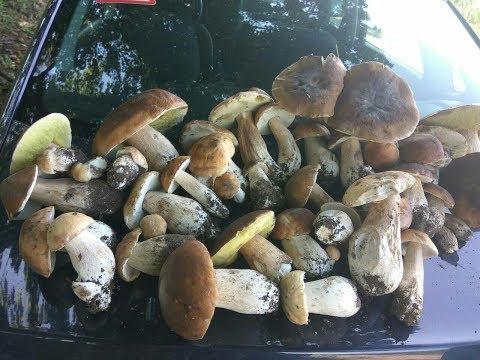 Сбор Белых Грибов!!! Удачный сбор белых грибов от 08.07.17. ЛЕС ПОРАДОВАЛ!!!